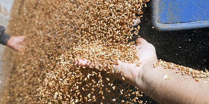 Формула усушки зерна